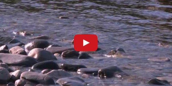 Fliegenfischen auf Atlantische Lachse an der Orkla