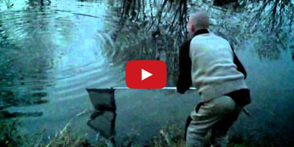 Riesige Forelle bringt Angler zu Fall