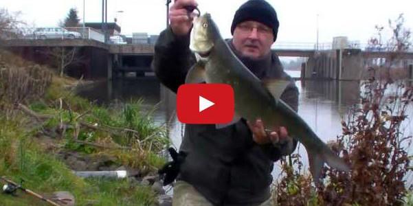 Rapfen angeln im Fluss