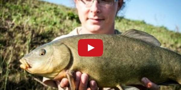 Schleien angeln an der Bucht 09