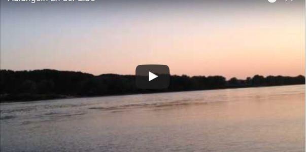 Aalangeln an der Elbe