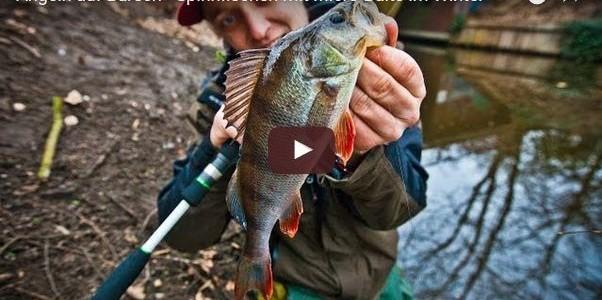 Barsch angeln im Winter mit Carolina-Rig