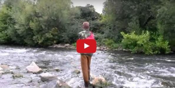 Rapfen angeln im Neckar