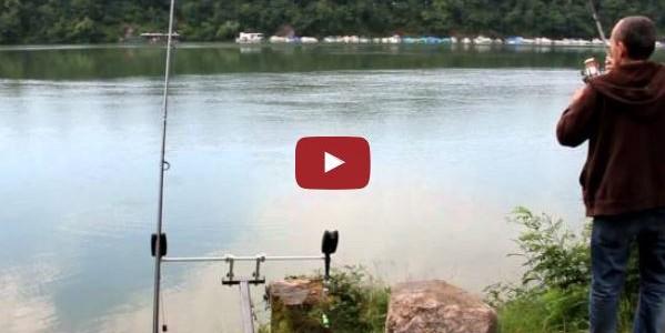 Karpfen am Rhein