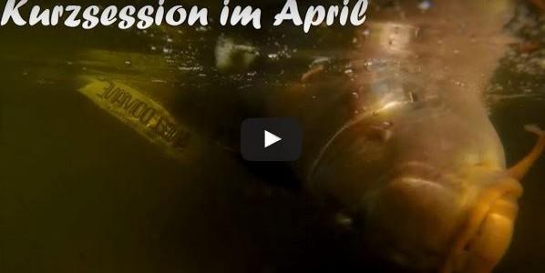 Karpfenangeln im April