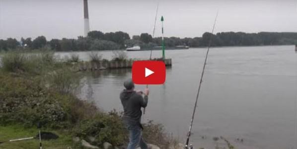 Aal am Rhein